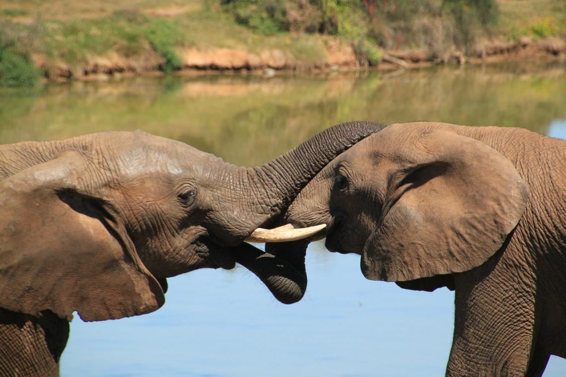 elephant-241620_1280