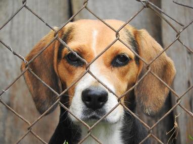 beagle-938013_1280