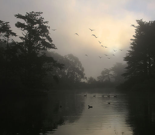 canada_geese_and_morning_fog