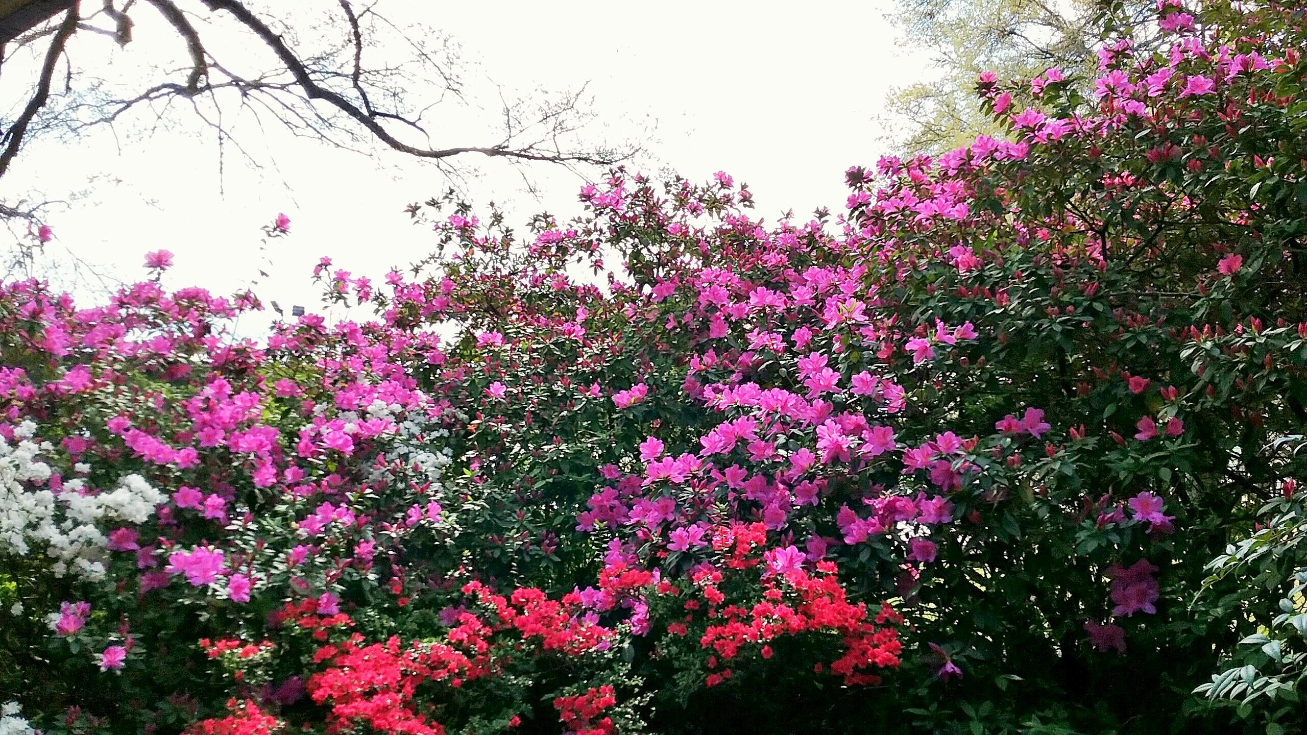 Springing Forth 2017