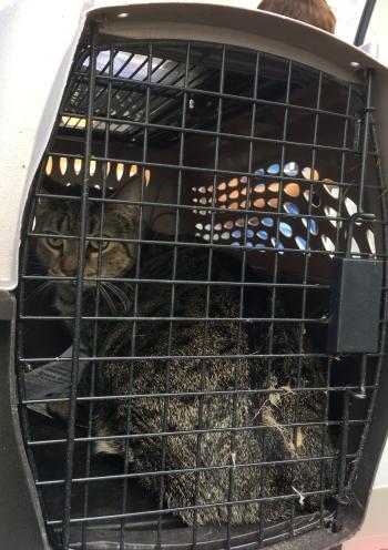 2-first-cat-off-the-truck.jpg