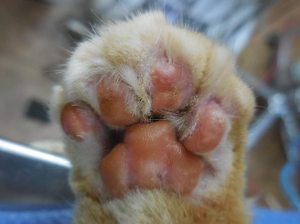 declawed_paw