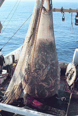 Members of the European Parliament Vote to Ban Electric Pulse Fishing