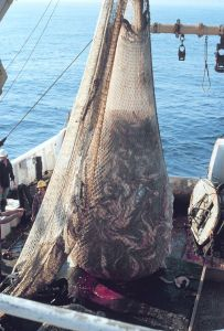 512px-Fish_on_Trawler