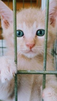 kitten-2714794_1280
