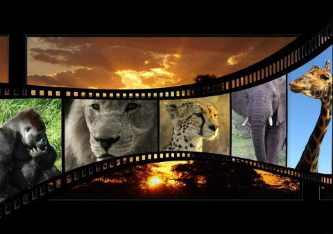 Animals in film