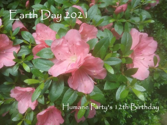 Flowers celebrating Earth Day 2021 and the Humane Party's 12th Birthday | Photo by Humane Herald staff